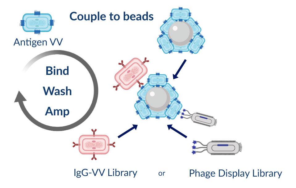 Antigen-Virus-3-mobile