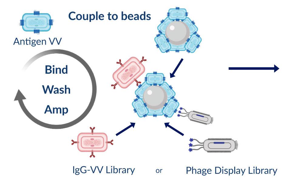 Antigen-Virus-3